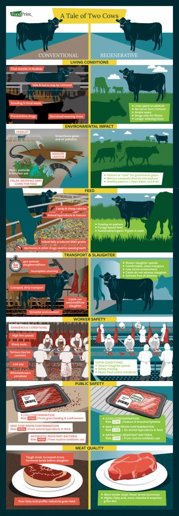 Beef_Infographic_AllSectionsTogether_1500pxWide_R